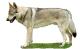 http://www.cswolfdog.cz/images/com_adsmanager/categories/4cat_t.jpg