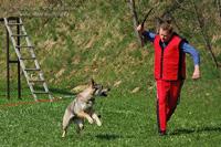 Útok na psa