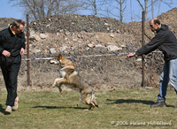 Vydráždění psa